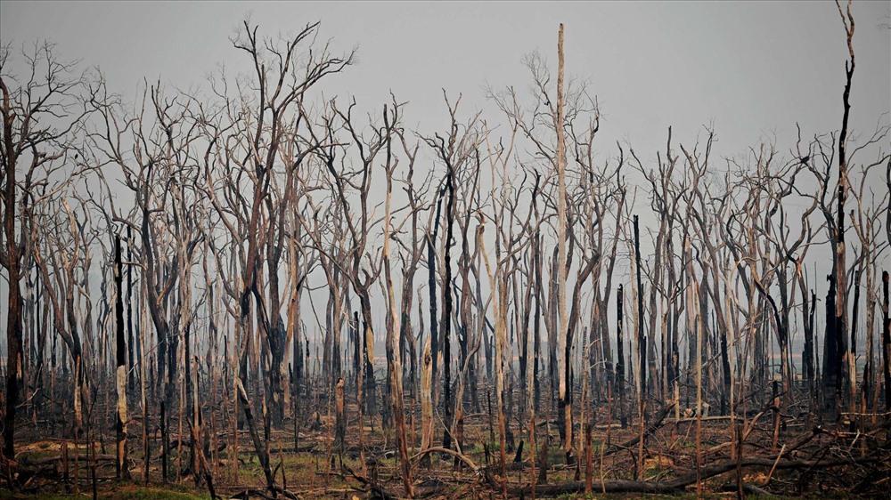 Ngoài ra, rừng Amazon cũng là nơi có khoảng 6.598km các con sông chảy qua. Và hiện khu rừng được mệnh danh là lá phổi xanh của trái đất đang bị cháy.  Dưới đây là những con số cho thấy mức độ nghiêm trọng của việc cháy rừng Amazon với nhân loại: