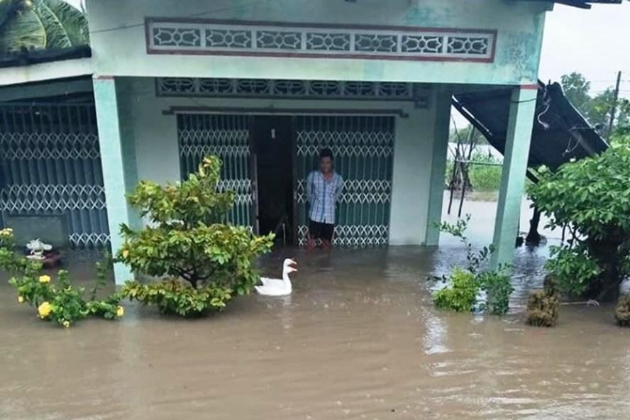 Gần 800 ngôi nhà tại Cà Mau bị ngập trong nước do ảnh hưởng bão, nước tràn qua đê (ảnh CTV)