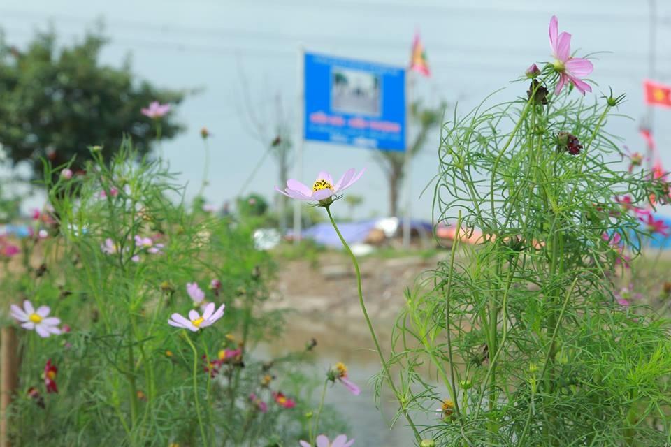 Con đường trồng nhiều hoa dọc bờ kênh cải tạo.