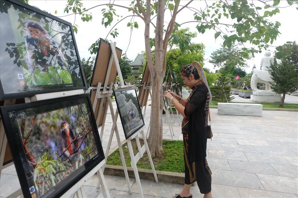 Du khách thích thú chụp lại những hình ảnh voọc chà vá.