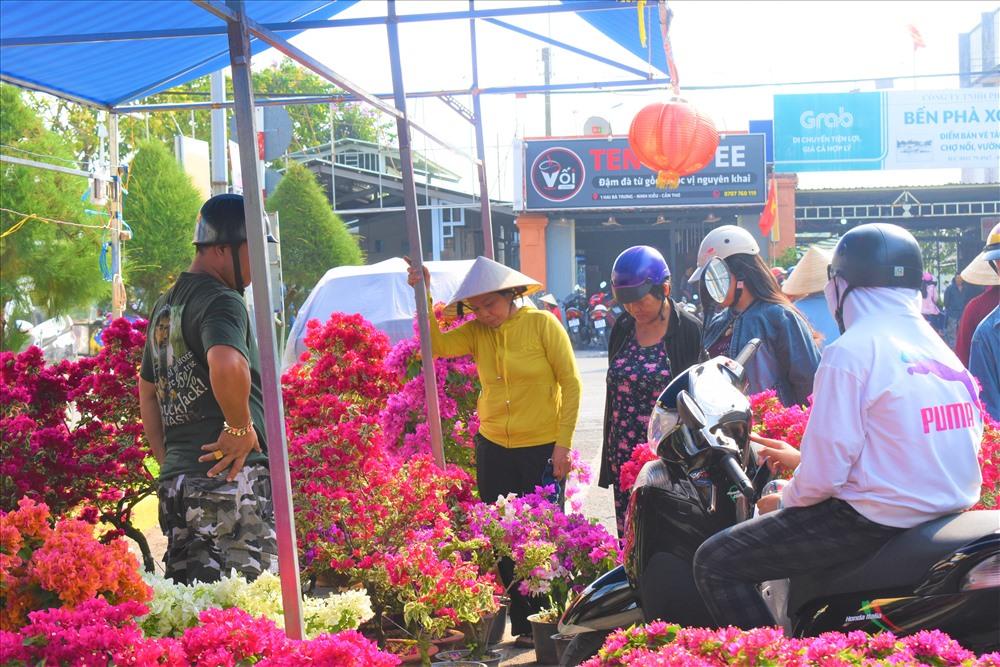 Khu vực bến Ninh Kiều là sôi nổi nhất với hàng trăm gian hàng bày bán nhiều loại hoa kiểng đa dạng về chủng loại. Trong đó chủ lực là ly (bách hợp), pha lê, mai vàng, vạn thọ, cúc, dạ yến thảo, xương rồng. Ảnh: Thành Nhân