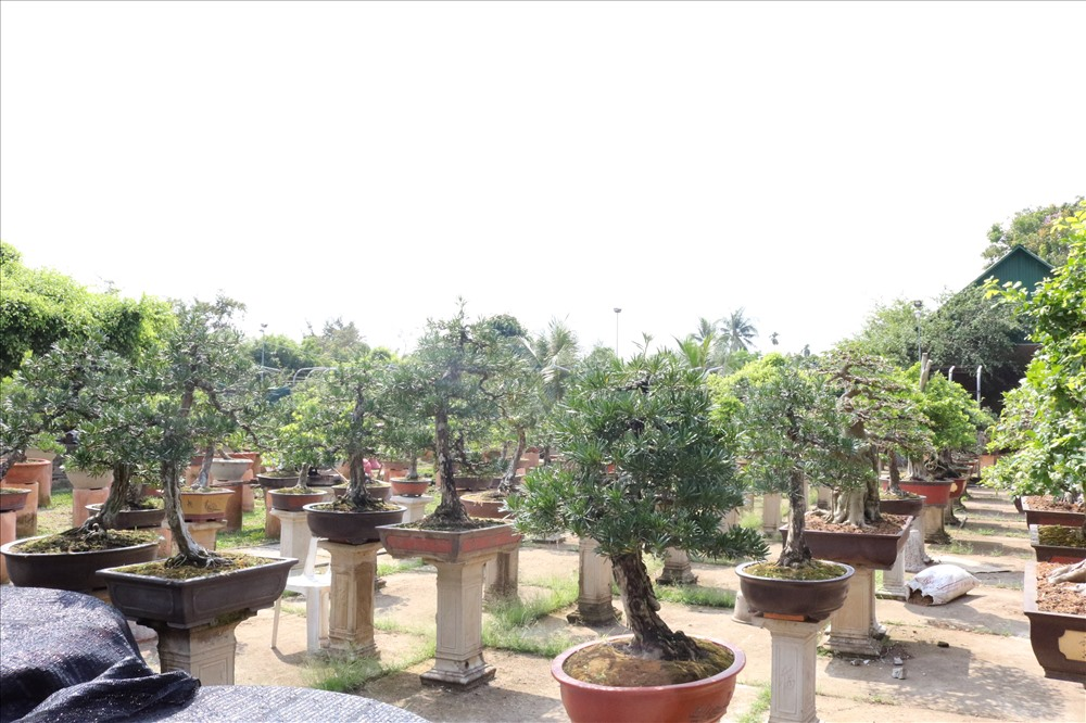 Theo anh Lộc, nghệ thuật bonsai ở TP Sa Đéc hiện nay vẫn chưa được quan tâm đúng mức. Vì thế, anh đang đẩy mạnh liên kết, giao lưu với nghệ nhân các nước có nghệ thuật bonsai phát triển như Đài Loan, Thái Lan, Trung Quốc... để làm giàu thêm nghệ thuật bonsai của mình.