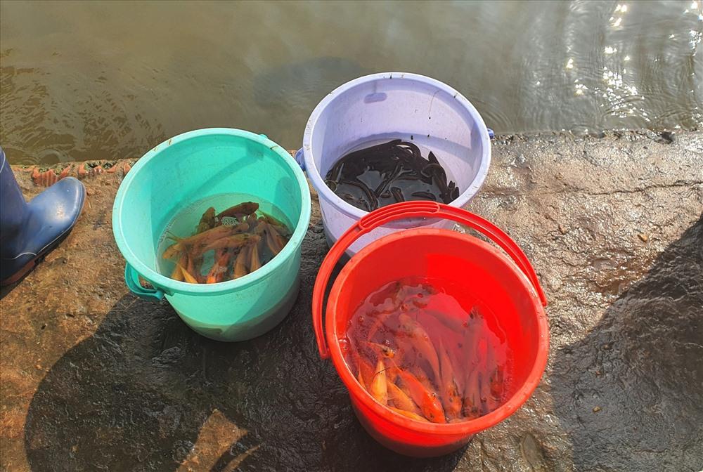 Một số loại cá chủ yếu được phóng sinh là cá chép, cá trê, cá rô.