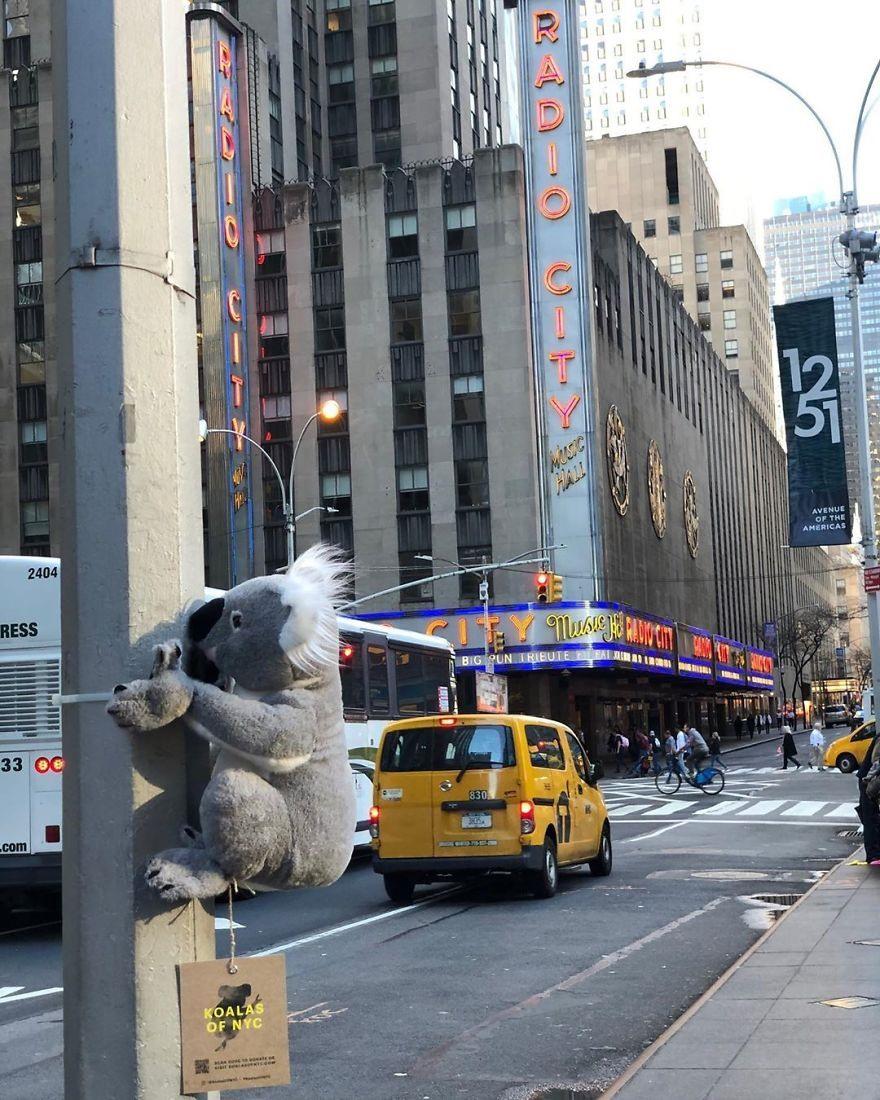 Gau bong Koala