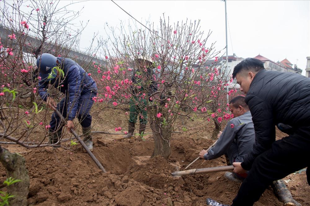 26 Tết chị Yến sẽ đánh hết vườn đào chuyển vào miền Nam để bán, từ nay cho tới hôm đó chị sẽ vẫn để du khách tới tham quan và chụp ảnh bình thường.