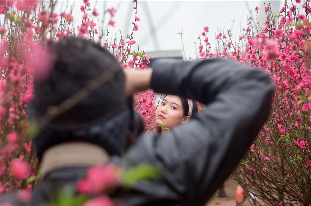"""Chị Đỗ Hồng Yến 48 tuổi chủ vườn đào tại phường Phú Thượng Tây Hồ Hà Nội chia sẻ: """"vườn nhà chị mọi năm không cho mọi người vào chụp ảnh đâu, hôm trước có mấy cô chú thấy vườn đào nhà chị đẹp quá cứ rúi tiền cho chị xong xin vào chụp ảnh,…"""""""