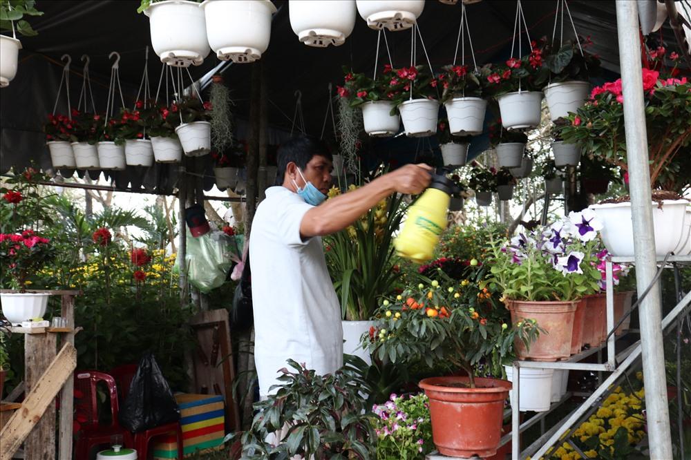 Nhiều nhà vườn vẫn miệt mài chăm lo cho vựa hoa của mình.