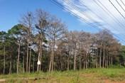 Thanh tra kết luận hàng loạt sai phạm về quản lý, sử dụng đất rừng Đắk Nông