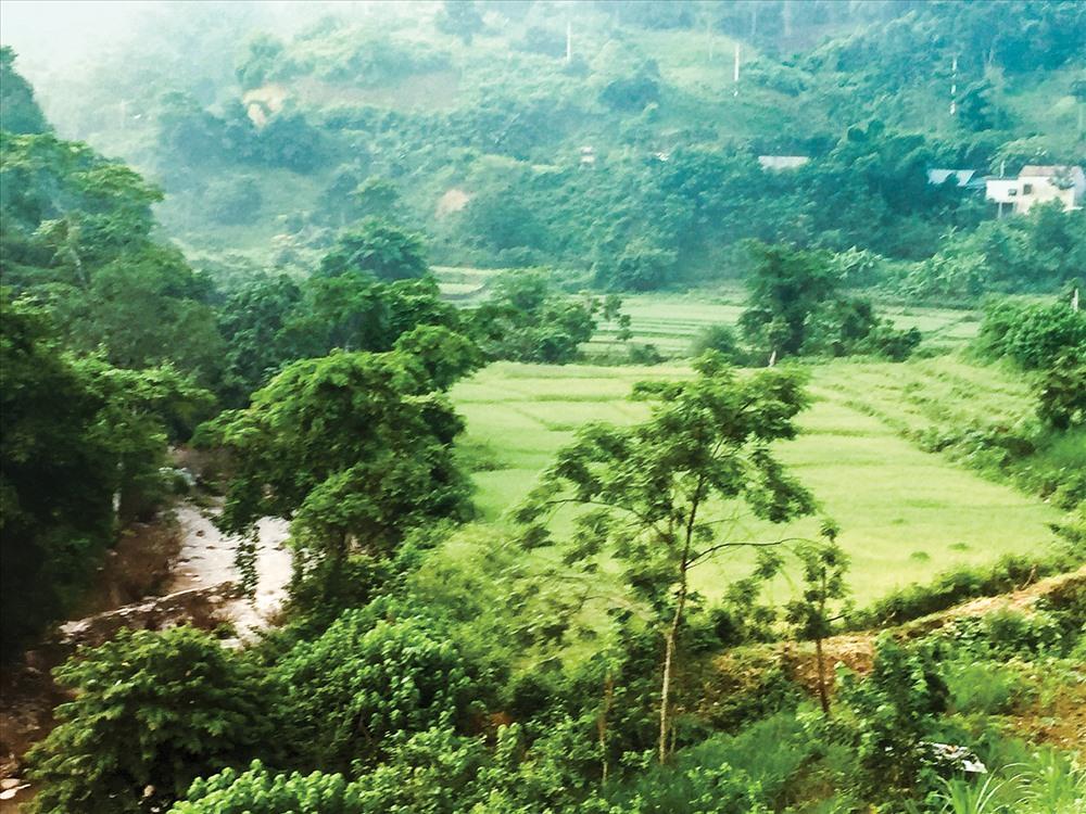 Ruộng lúa trồng lúa Tẻ thơm truyền thống ở bản Na Khướng, xã Na Loi. Ảnh: Minh Thư