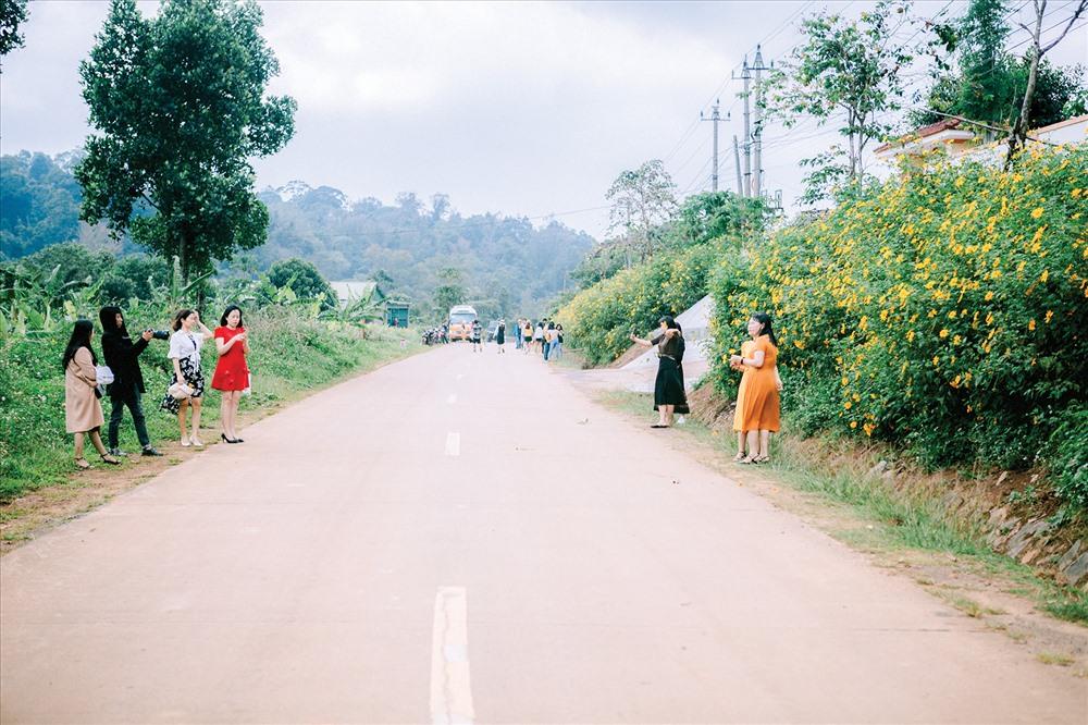 Người dân đến tham quan con đường hoa dã quỳ.