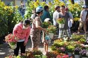TPHCM: 30 Tết, giá hoa rớt thê thảm