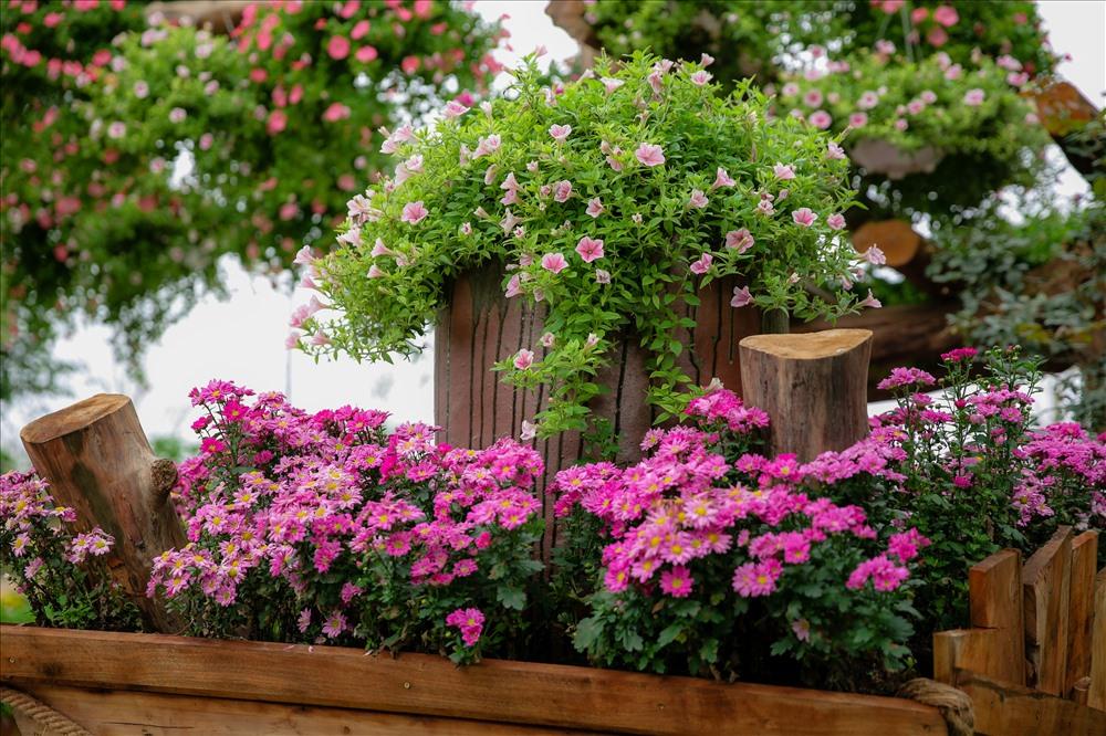 Ngay từ khi bước vào cổng, du khách được đón chào bằng con đường hoa muôn màu ngập tràn sắc xuân.