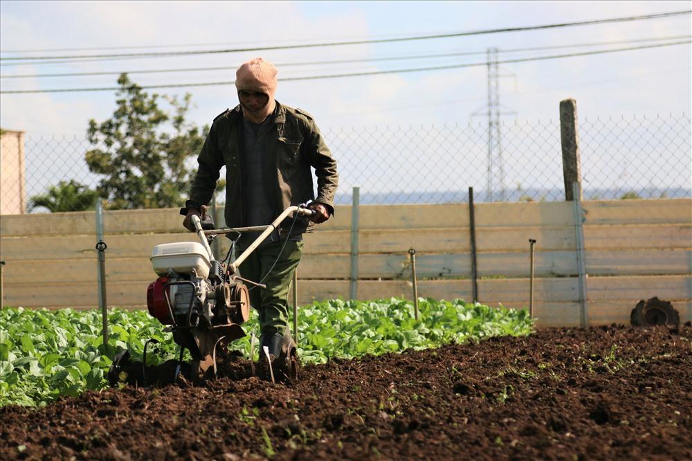 Trước tình hình trên, nhiều hộ dân cũng đã lên kế hoạch cải tạo đất, bón phân để gieo trồng vụ mới với hy vọng ra Tết giá rau sẽ ổn định trở lại