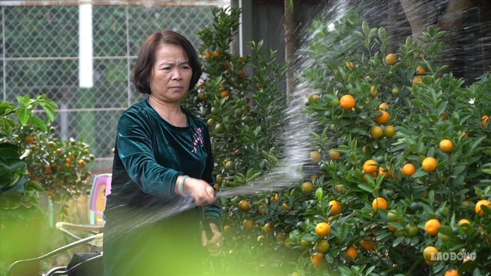 Nắm bắt được nhu cầu đó của người tiêu dùng, một chủ nhà vườn tại làng quất Tứ Liên (Hà Nội) đã lai ghép, tạo hình thành công giống bưởi cảnh hồ lô này và đưa ra thị trường.