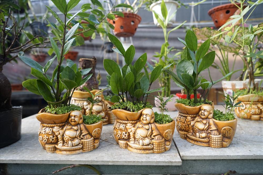 Chị Nhi - chủ nhà vườn Phong Nhi cho biết: Hoa, cây cảnh ở đây được nhập về từ nhiều nước như Pháp, Nhật, hoặc các trung tâm xuất hoa nổi tiếng như Đà Lạt, Ngọc Hà...Đồng thời có nhiều loại hoa, cây cảnh do người dân địa phương trồng, tạo dáng. Ảnh: QĐ