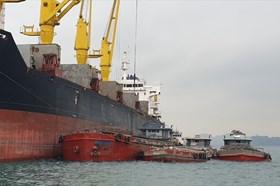 Nhập khẩu than qua cảng biển Quảng Ninh tăng mạnh