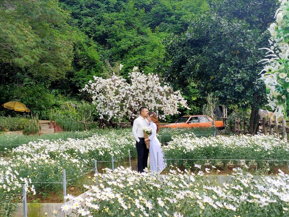 Mỗi ngày có hàng chục đôi uyên ương đến vườn hoa để chụp ảnh cưới. Ảnh: Q.D