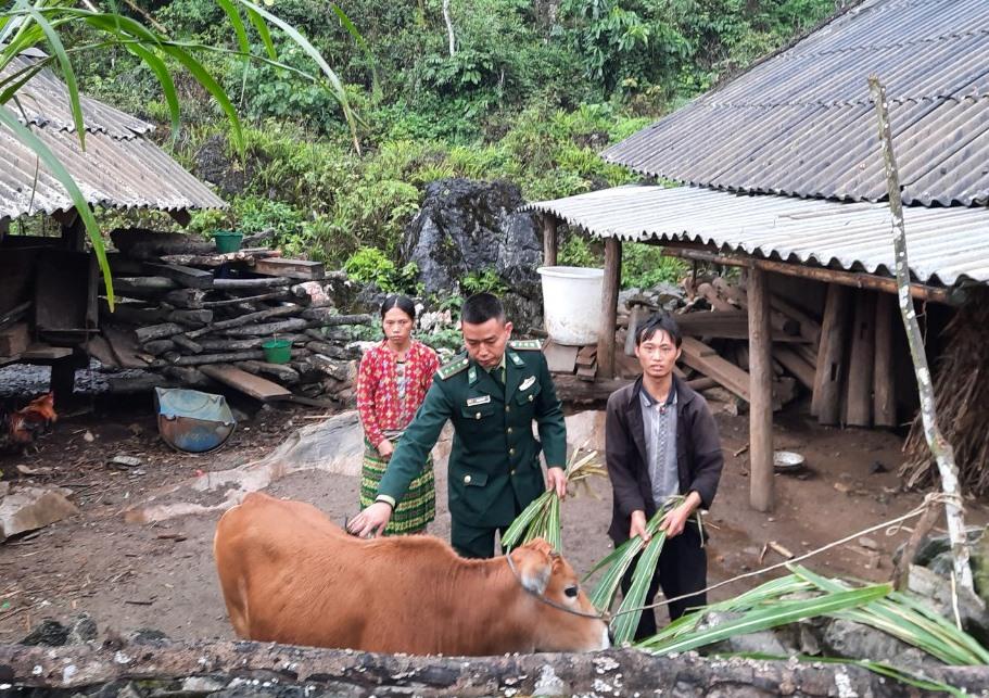 Sau vài tháng nhận con bò giống từ bộ đội biên phòng Đồn Biên phòng Sơn Vĩ, anh Dống (ngoài cùng, bên phải) vui mừng vì bò đang phát triển tốt. Ảnh: V.Dũng.