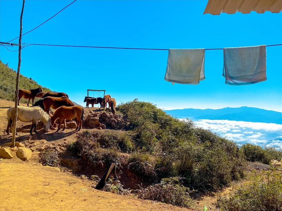 """Điểm cao này được du khách chinh phục lần đầu tiên vào năm 2013 và được mệnh danh là """"thiên đường mây nơi hạ giới"""". Ảnh: Phạm Thu Hương"""