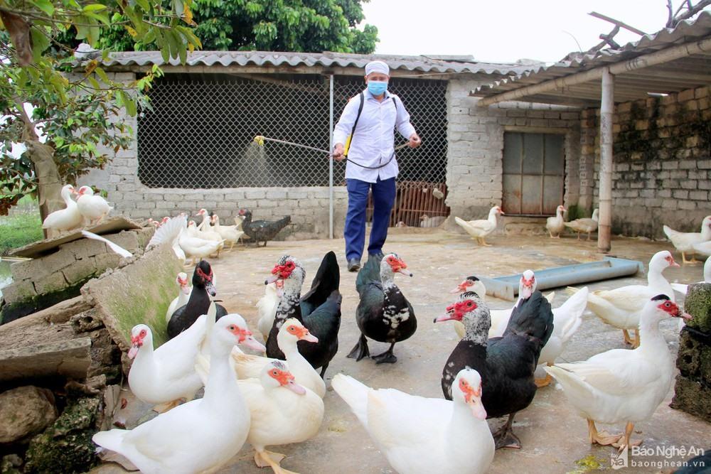 Cán bộ thú y phun hóa chất khử trùng để bảo vệ đàn gia cầm khỏi dịch cúm A/H5N6 tại Nghệ An. Ảnh: Quang An
