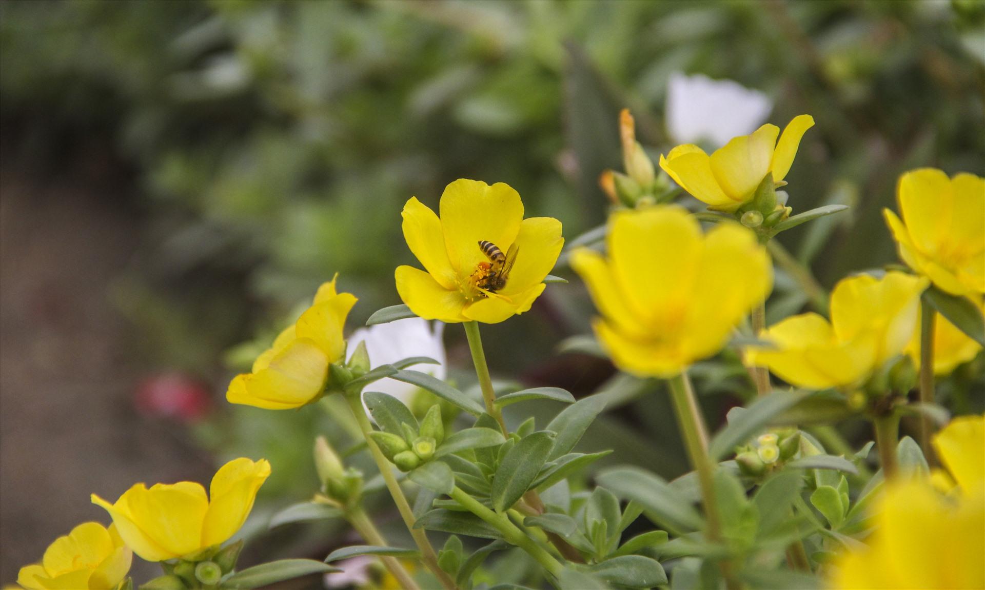 """""""Ban đầu trồng sao để hoa sống được là cả một vấn đề, nhưng trồng hoa miết nên chừ chăm sóc chúng dễ lắm, sáng sớm ra tưới nước, tối về nhổ cỏ rồi tưới thêm một lần nước nữa là xong"""" – ông Toản chia sẻ."""