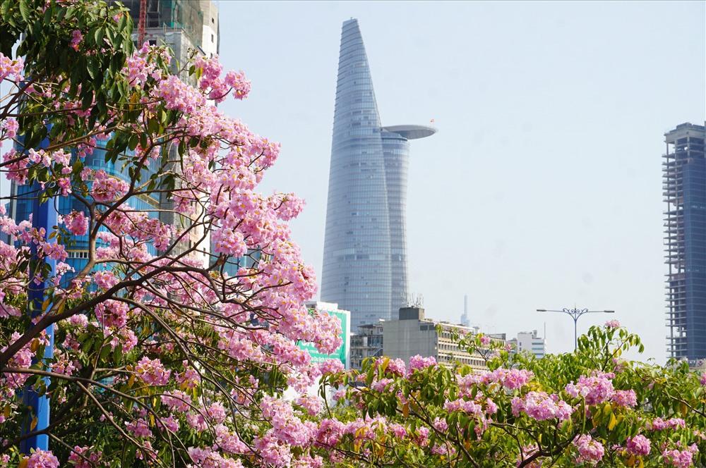 Hoa nở rộ khiến Sài Gòn trở nên lãng mạn hơn.