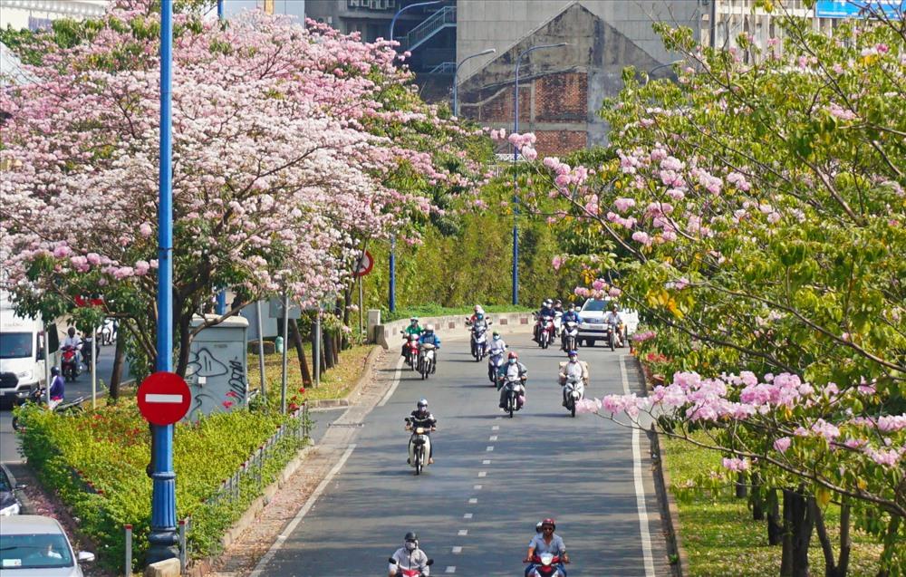 Đường Võ Văn Kiệt rợp hoa phía miệng hầm Thủ Thiêm (quận 1).