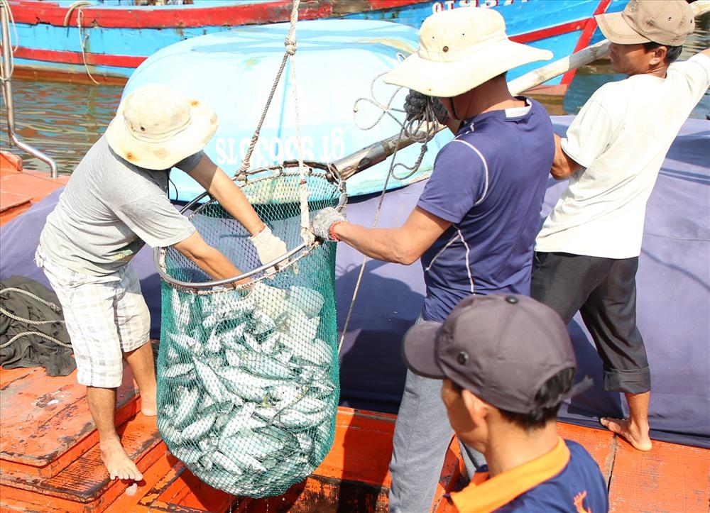 Tàu cá QT93636 của ngư dân Quảng Trị vay vốn nâng cấp theo Nghị định 67 hành nghề lưới vây. Vào ngày 6.2, tàu ra khơi cùng 12 thuyền viên đánh bắt cá ở vùng biển Quảng Trị cách bờ 35 hải lý.