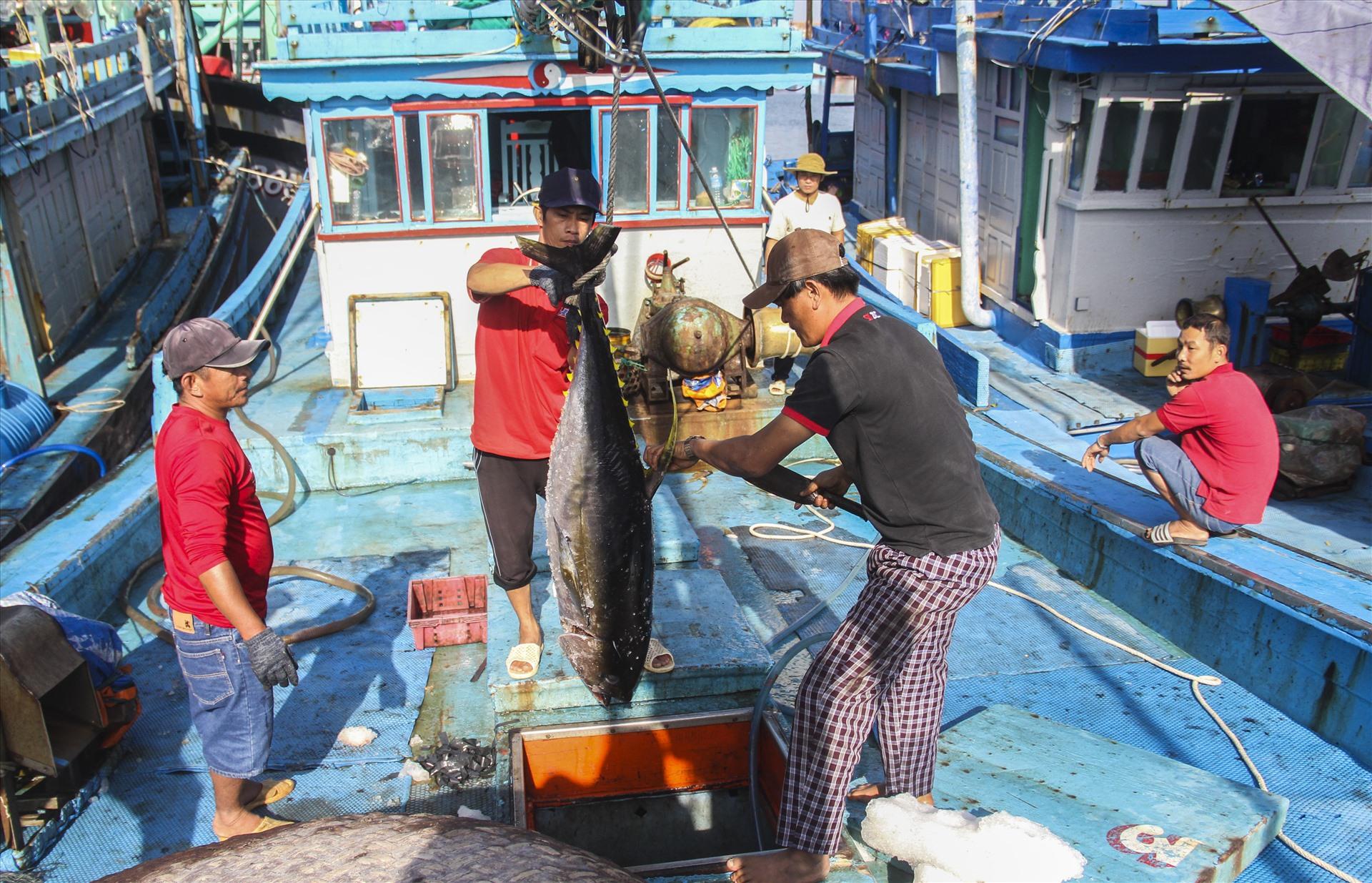 UBND yêu cầu xóa đăng ký các tàu cá không có hoặc hết hạn giấy phép khai thác thủy sản nhưng không thực hiện cấp phép khai thác thủy sản mới theo quy định.