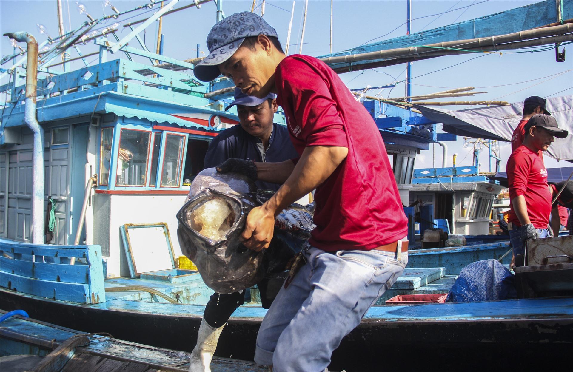 Ngư dân Bình Định khai thác cá ngừ đại dương.