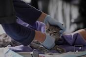 WHO: Nghiên cứu sâu hơn về lây truyền COVID-19 giữa người và vật nuôi