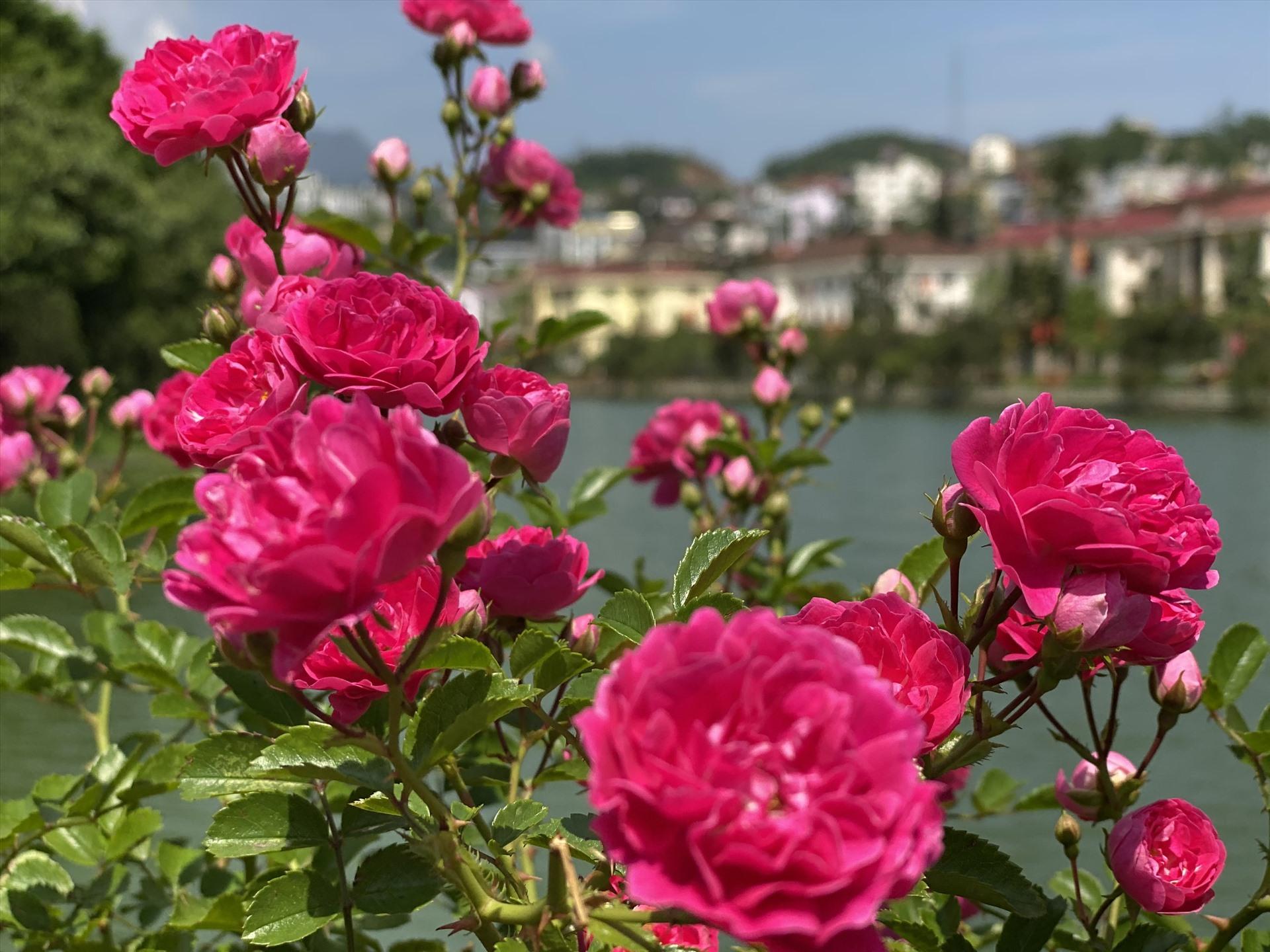 Một số loại hoa quý hiếm cũng được trồng tại đây, giúp du khách dễ dàng chiêm ngưỡng vẻ đẹp.
