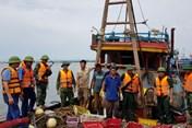 Hà Tĩnh: Bắt giữ 2 tàu giã cào