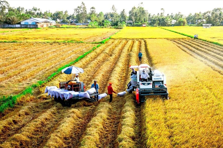 Cần Thơ cần dựa trên thế mạnh nông nghiệp của vùng ĐBSCL để trở thành trung tâm, cung cấp các dịch vụ tiến bộ cho sự phát triển của vùng. Ảnh: T.lưu