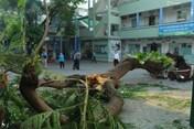 Lời kể của nạn nhân vụ cây đổ đè nhiều học sinh tại TP Hồ Chí Minh