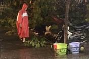 TPHCM: Nhánh cây gãy, rơi xuống đường làm 1 người chết tại chỗ