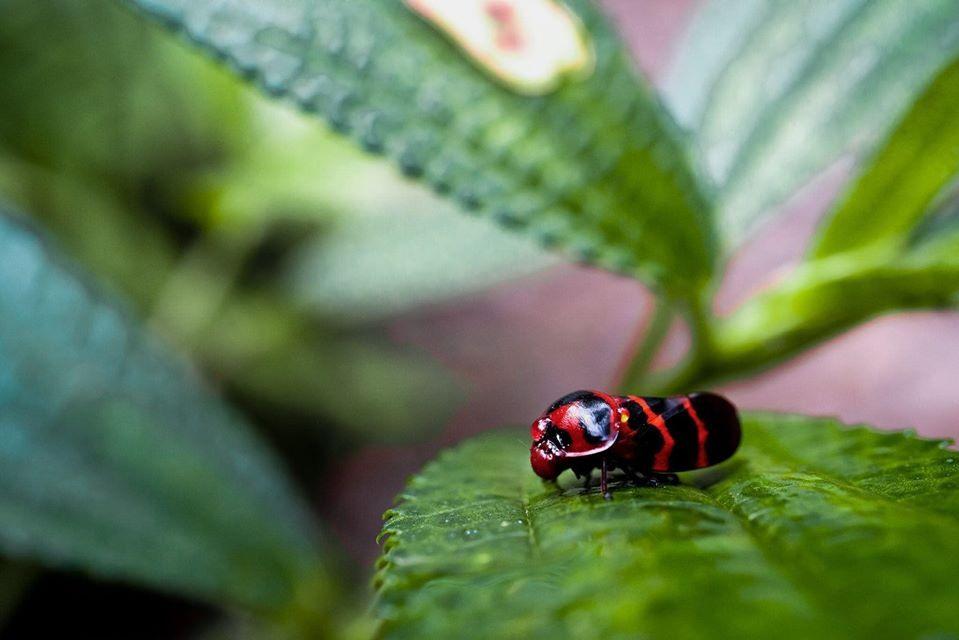 Vườn Quốc gia Phong Nha – Kẻ Bàng được thiên nhiên ban tặng một tài nguyên vô cùng quý giá, nơi đó chứa đựng tính đa dạng của các hệ sinh thái tự nhiên.  Ảnh: Jungle Boss