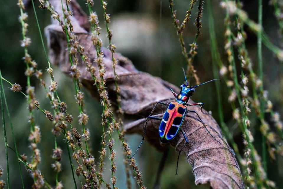 Đây là một bộ máy hoàn chỉnh cho quá trình đồng tiến hóa của động vật, thực vật tại thành những mắt xích và mạng lưới thức ăn bền vững trong môi trường tự nhiên.  Ảnh: Jungle Boss