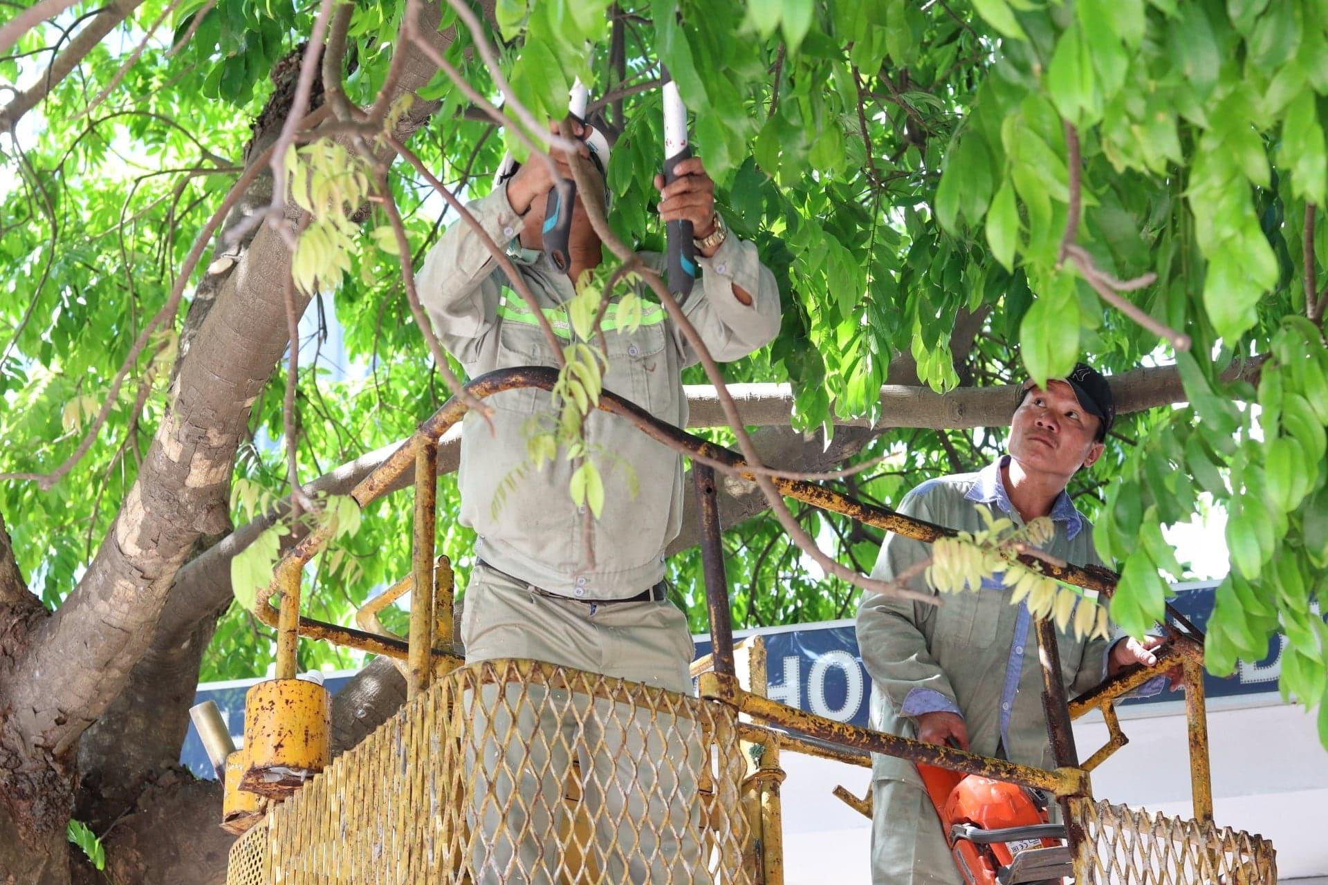 Công tác cắt tỉa cây trước mùa mưa bão được tích cực triển khai trên tuyến phố Mai Dịch, Nguyễn Khả Trạc (Hà Nội).