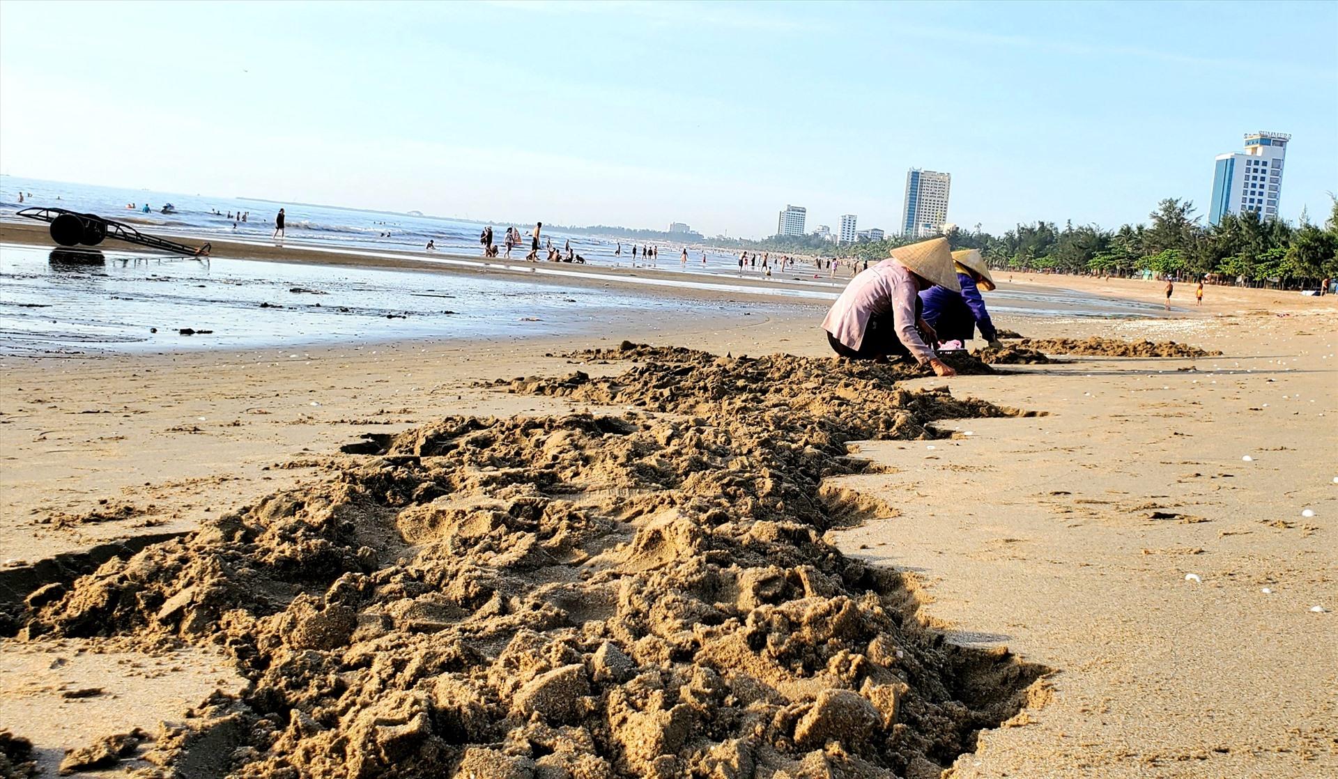 Những con Ngao được lấy lên từ dưới cát trên bãi biển. Ảnh: Lê Phi Long
