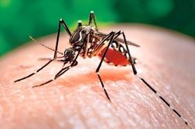 Dịch Chikungunya áp sát biên giới, Long An triển khai phòng chống