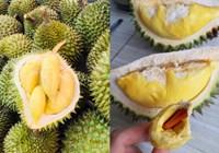 Xuất khẩu trái cây sang Thái Lan tăng mạnh 234%