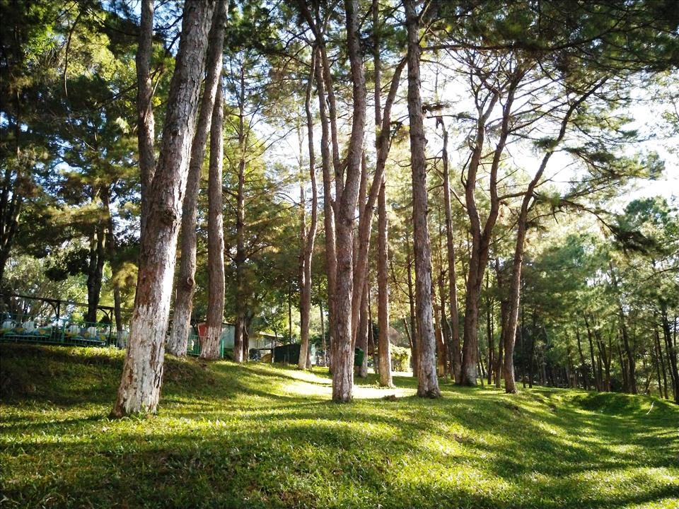 Đây là cánh rừng thông cổ thụ, được trồng từ hàng trăm năm trước, nhiều cây thông phủ màu rong rêu của thời gian. Phía bên kia bờ hồ là hàng cây liễu, tỏa bóng in hằn trên màu nước long lanh của hồ, tạo nên một khung cảnh yên bình và bóng mát quanh năm.