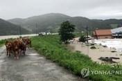 Hàn Quốc công bố thiệt hại khủng do mưa bão, chưa tính Maysak và Haishen