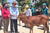 Nguyên Chủ tịch Nước Trương Tấn Sang tặng 200 bò giống cho hộ nghèo Long An