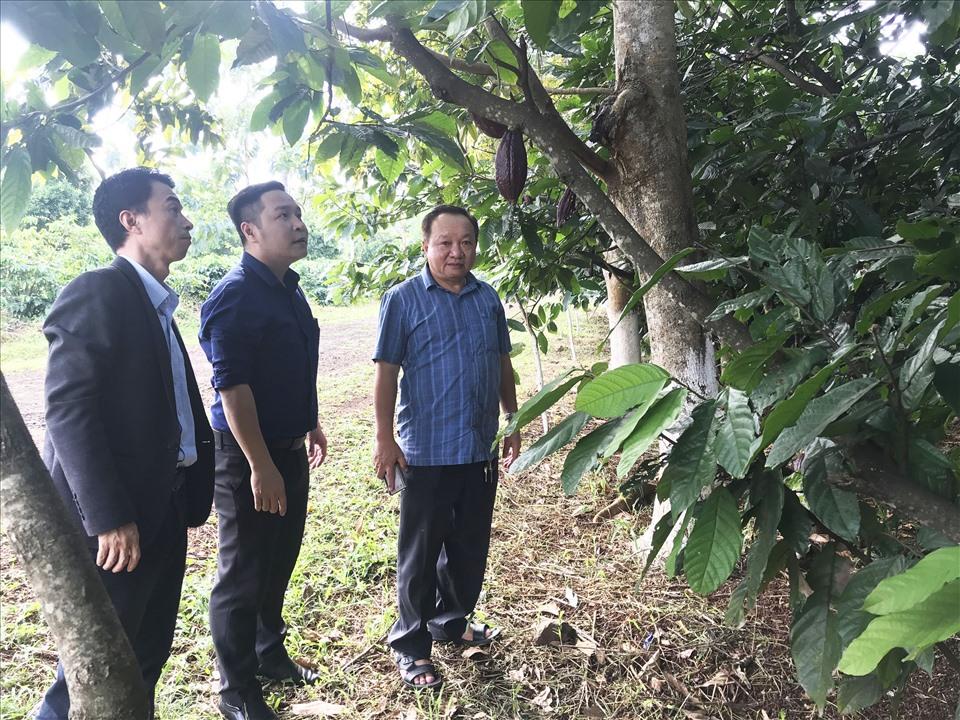 Khách du lịch đến tham quan một vườn cây giống ở TP.Buôn Ma Thuột, tỉnh Đắk Lắk.