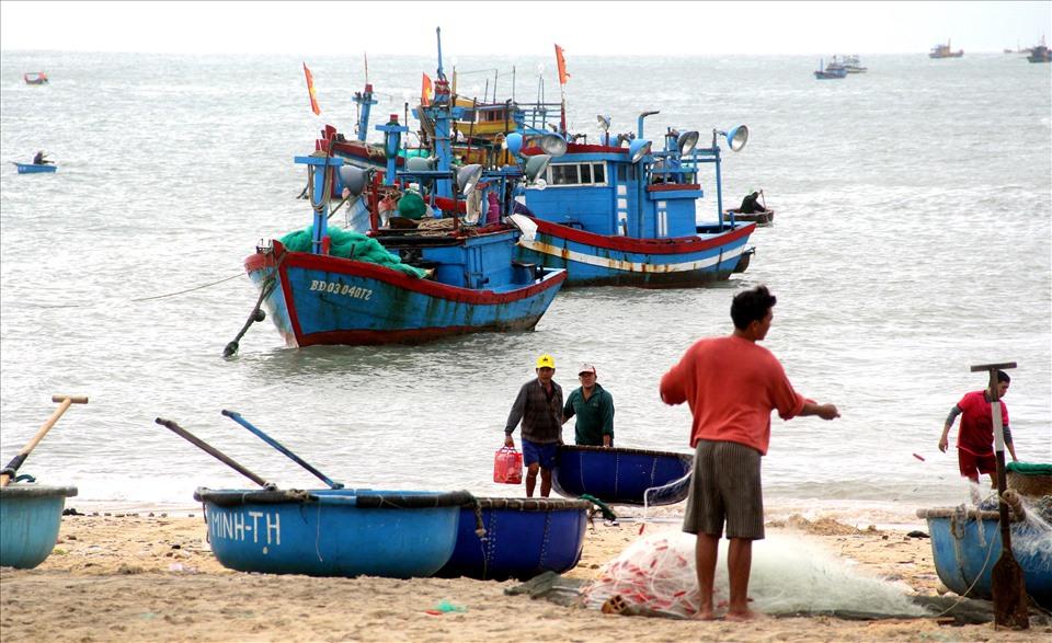 Các tàu cá khai thác tôm hùm giống ở xã Nhơn Hải. Ảnh: N.T