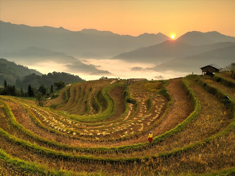 Bình minh mùa gặt ở Thông Nguyên
