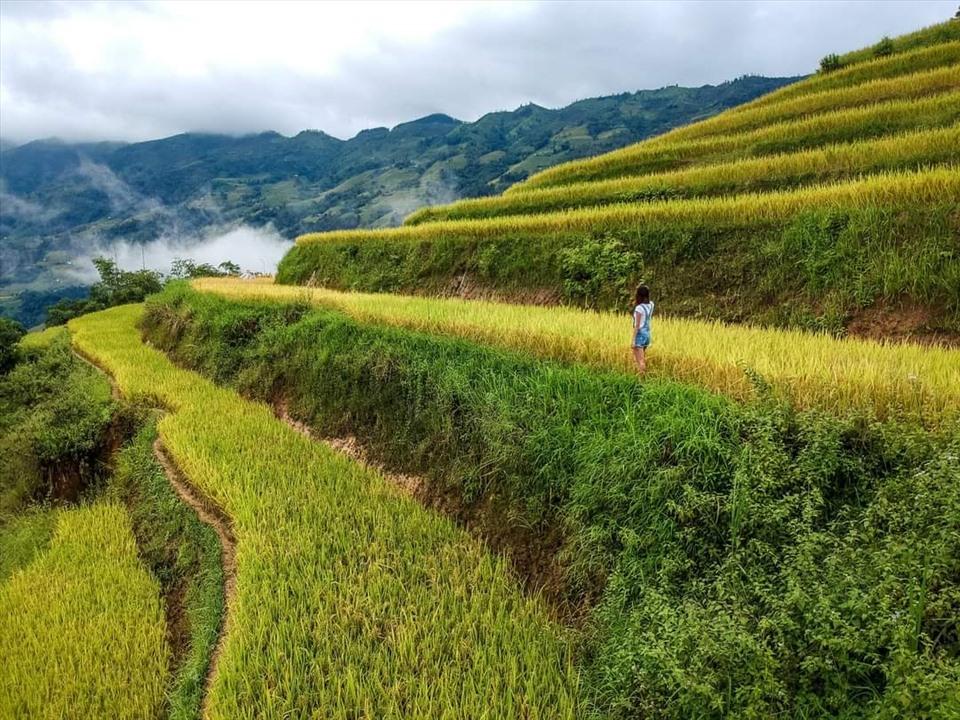 Ruộng bậc thang mùa vàng ở Bản Phùng