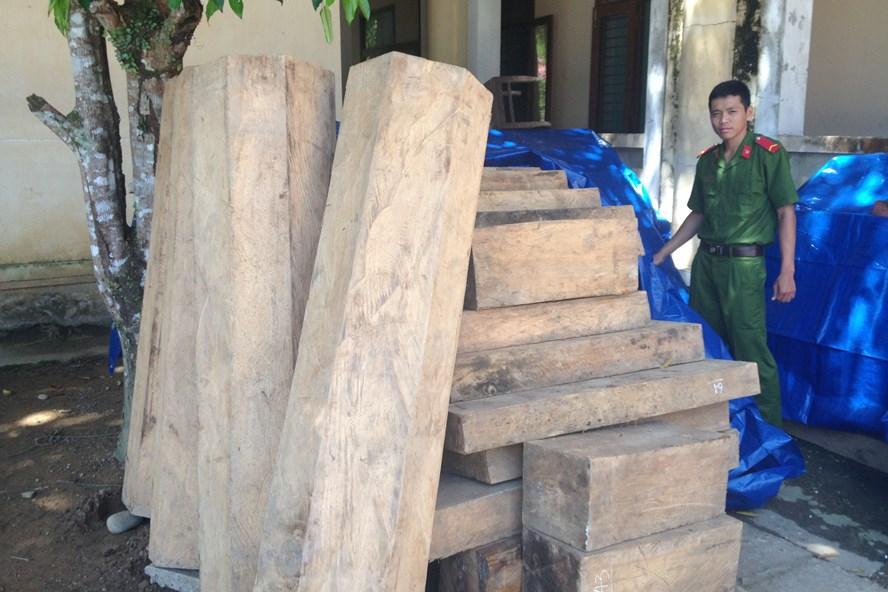 Gỗ Pơmu bị lâm tặc tàn phá tại huyện Nam Giang.